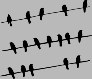 andorinhas grey
